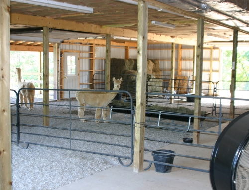 Our alpacas' house