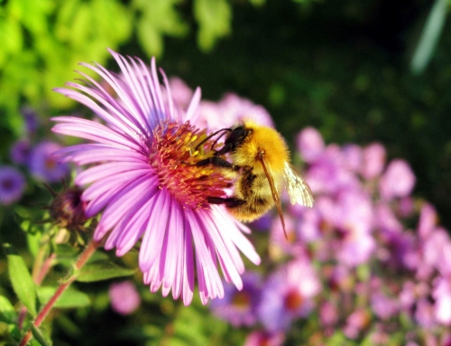 West Virginia wildflower honey, good tasting and good for you!
